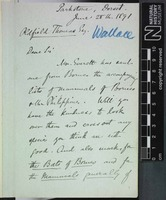 Sent by Alfred Russel Wallace to Oldfield Thomas on 28 June 1891.