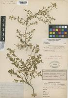 Filed as Hybanthus parviflorus (Mutis ex L. f.) Baill. [family VIOLACEAE]