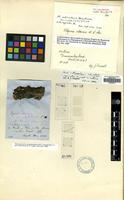 Holotype of Lecidea obscuroides Linds. [family LECIDEACEAE]