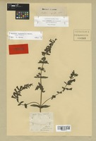 Isotype of Bartsia inaequalis Benth. [family SCROPHULARIACEAE]