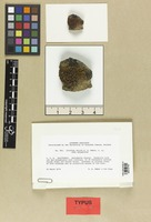 Isotype of Lecanora mellea W. A. Weber [family LICHENES]