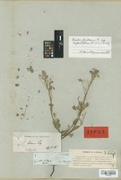 Isotype of Oxalis bahiensis Progel [family OXALIDACEAE]