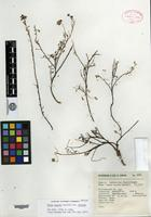 Isotype of Dalea hintonii Sandwith [family FABACEAE]