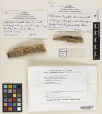 Holotype of Endophragmia triseptata Shearer, J. L. Crane, and M. A. Mill. [family NOT ON SHEET]