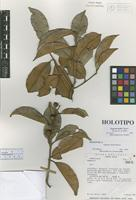 Holotype of Eugenia belloi Barrie [family MYRTACEAE]