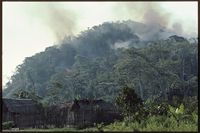 Madagascar rainforest on fire for rice cultivation.