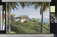 Spring Gardens, Jamaica, with its Cocoanut Palms