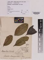 Filed as Hemileia woodii Kalchbr. & Cooke [family PUCCINIACEAE]