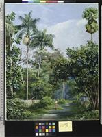 Road near Bath, Jamaica, with Cabbage Palms, Bread Fruit, Cocoa, and Coral Trees