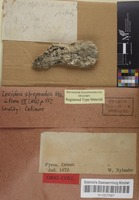 Original material of Lecidea strepsodea Nyl. [family LECIDEACEAE]