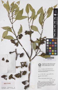 Isotype of Eucalyptus proxima D.Nicolle & Brooker [family MYRTACEAE]