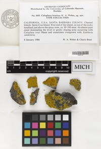 Isotype of Caloplaca brattiae W.A.Weber [family LICHENS]