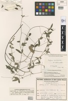 Isotype of Atylosia scarabaeoides var. pedunculata S.T.Reynolds & Pedley [family FABACEAE]