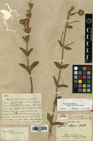 Holotype of Hyptis albipes A.St.-Hil. ex Benth. [family LAMIACEAE]