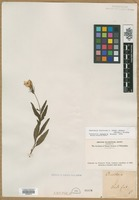 Filed as Oenothera fruticosa L. subsp. glauca (Michx.) Straley [family ONAGRACEAE]