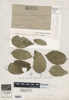Holotype of Hapalophragmium mysorense Thirum. [family RAVENELIACEAE]