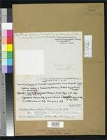 Filed as Leptothrix braunii Kuetzing, F.T. 1843 [family OSCILLATORIACEAE]