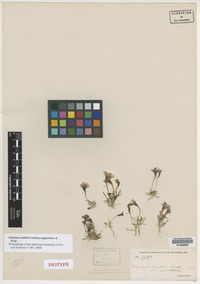Isotype of Eunanus coulteri Harv. & A. Gray ex Benth. var. angustatus A. Gray [family SCROPHULARIACEAE]